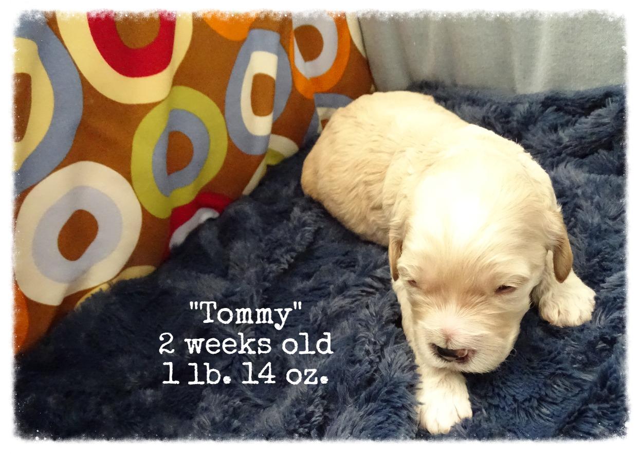 Tommy_2 weeks old_1.jpg