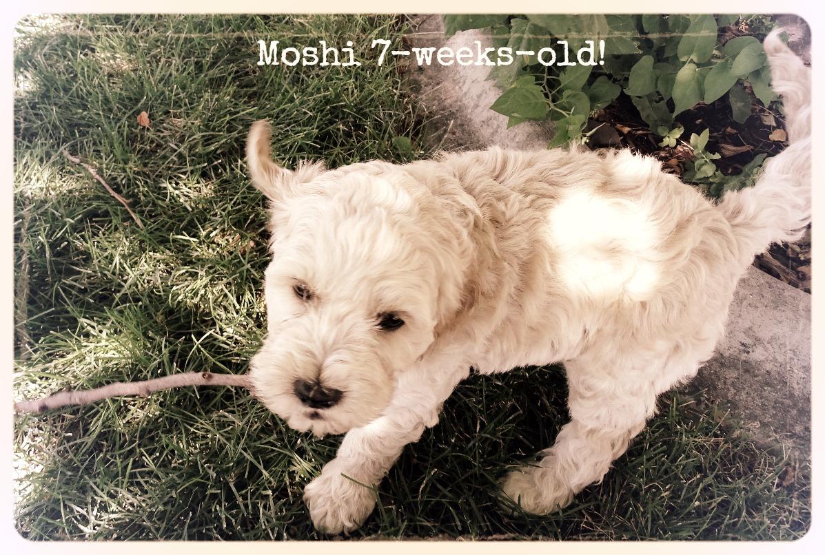Moshi_7 weeks old_2.jpg
