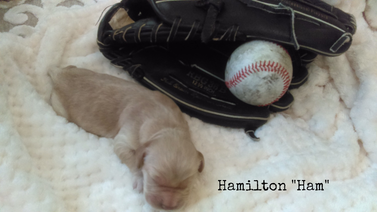 Hamilton_Ham_Birth Weight_2.jpg