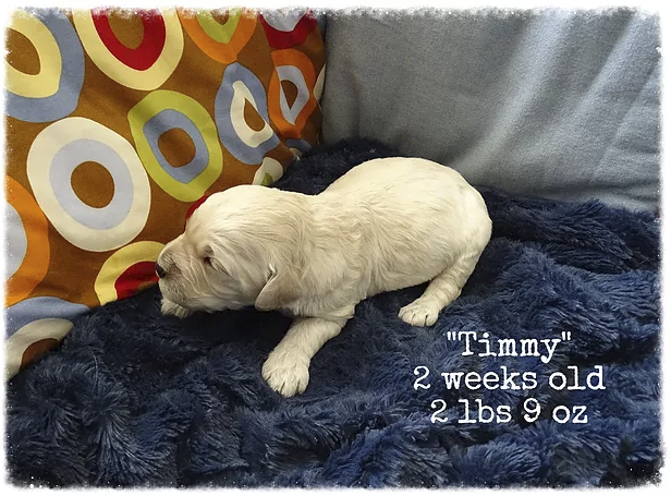 2-weeks-old