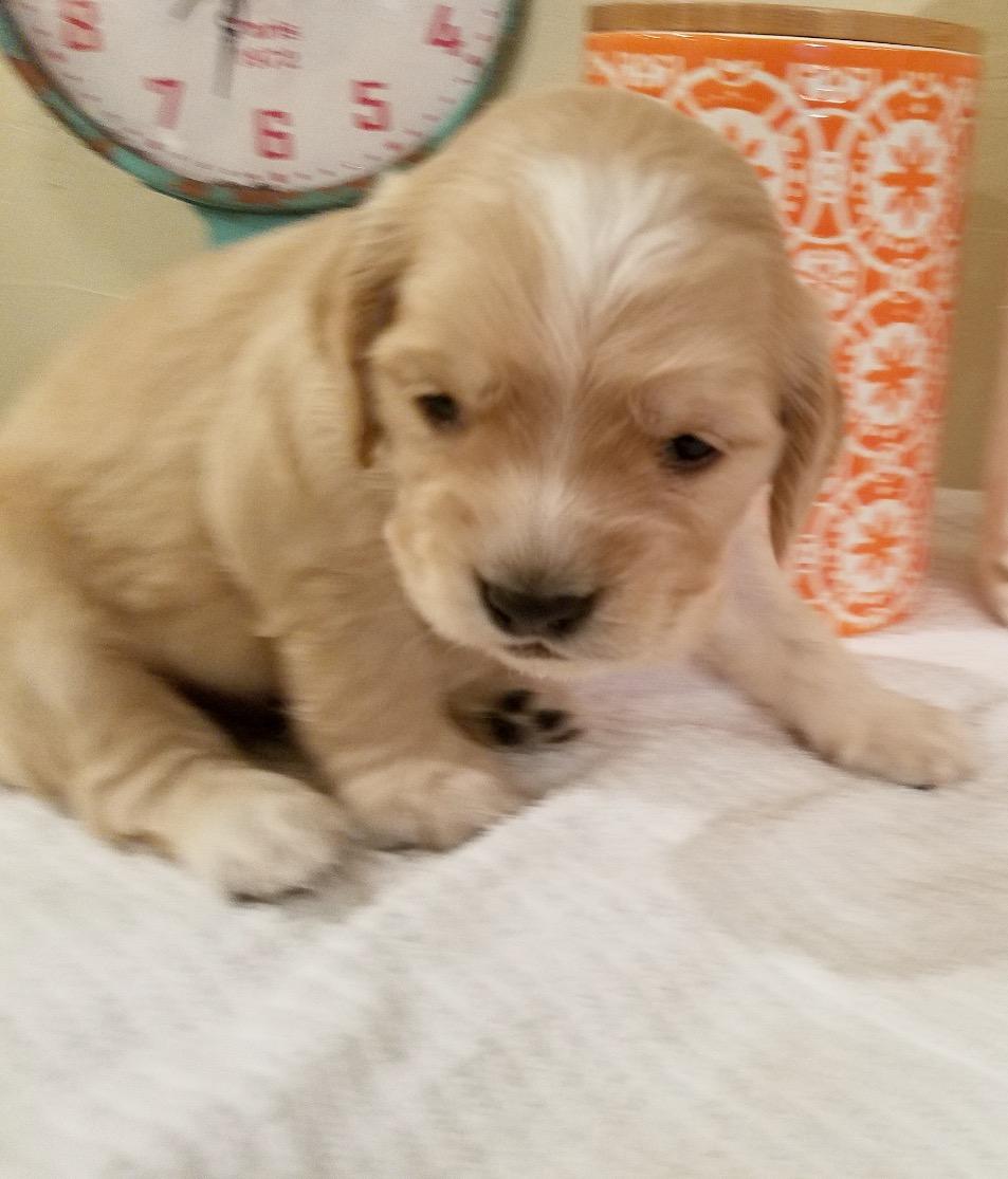 Aisy_3 weeks old_2 lbs 8 oz_1.jpg