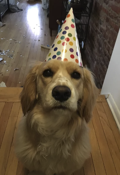 1 year birthday!