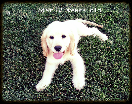 Star_12-weeks-old.png