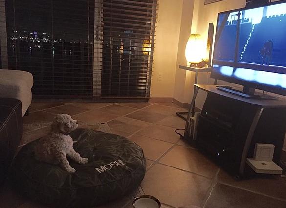 Moshi watching the Olympics!