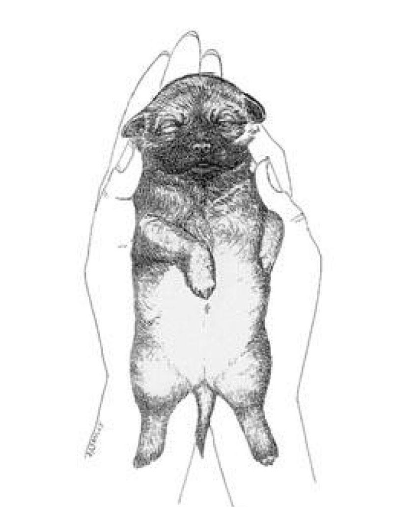 Figure 4 Figure Supine position