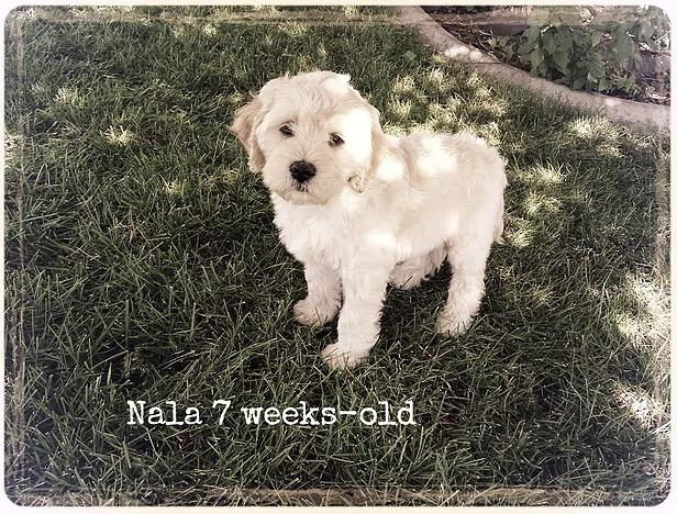 Nala 7-weeks-old