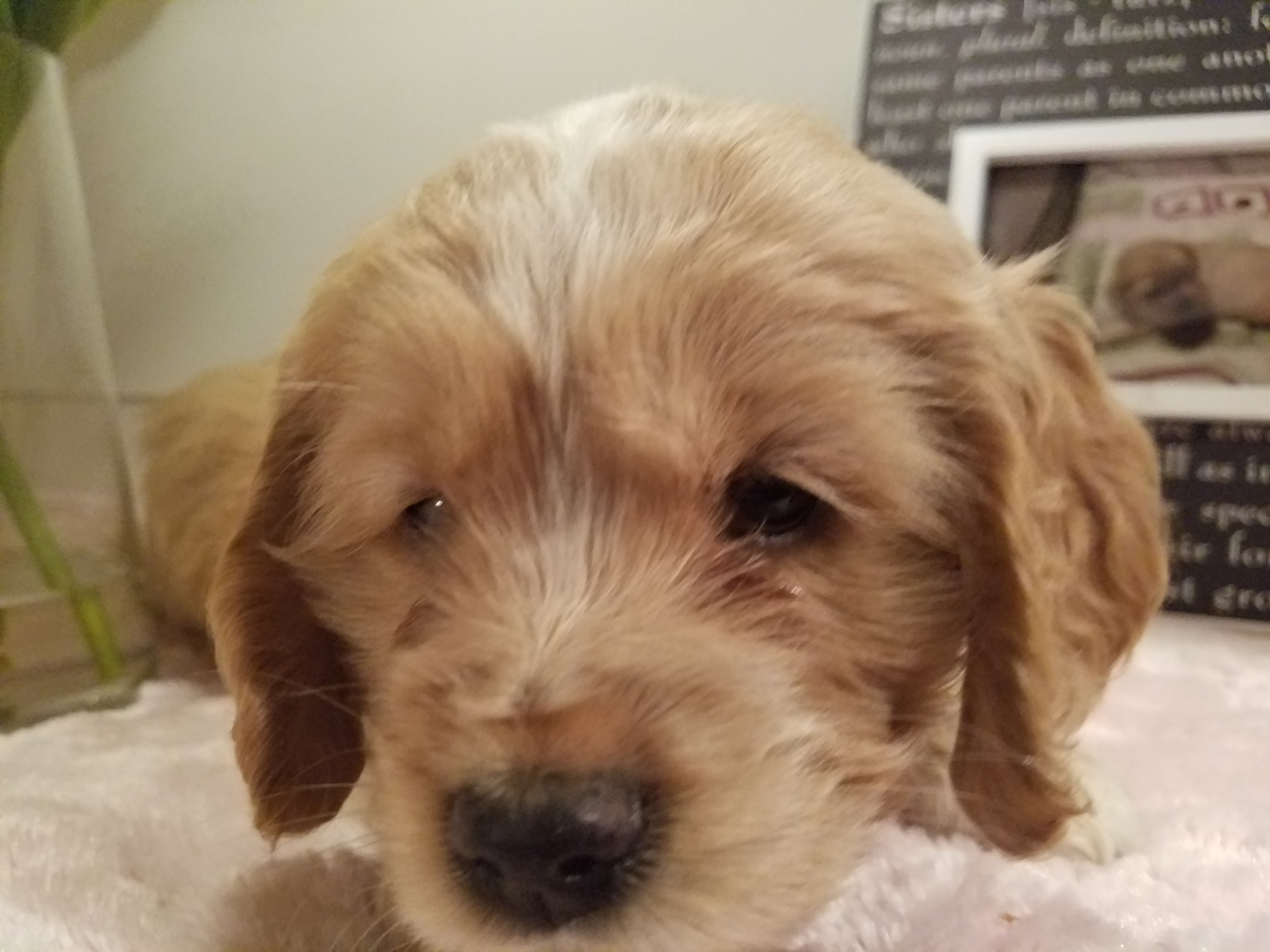 Ruby 6-weeks-old!