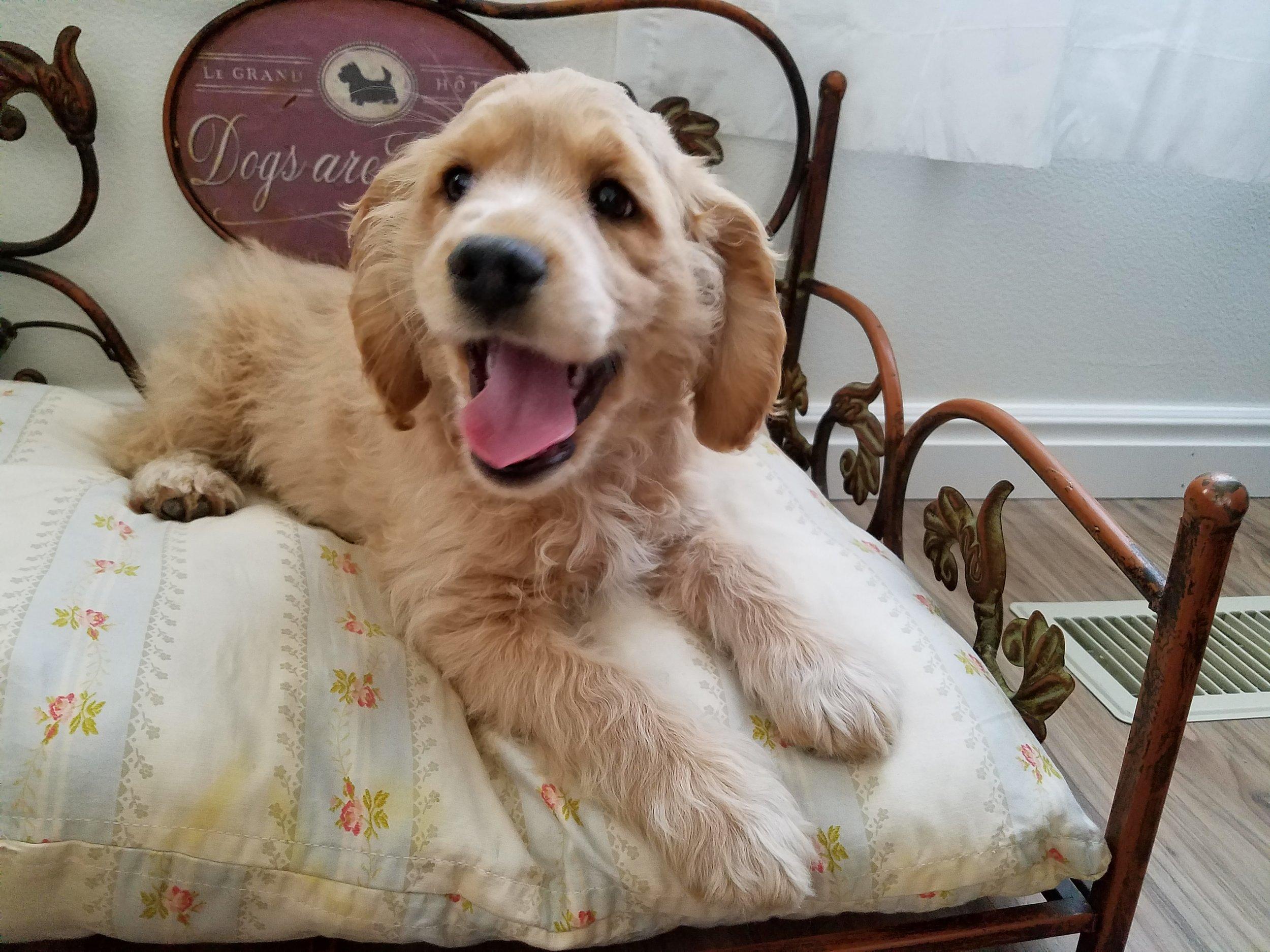 Ruby 11-weeks-old