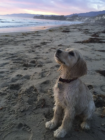Summer at the beach! - Photo courtesy of Lauren