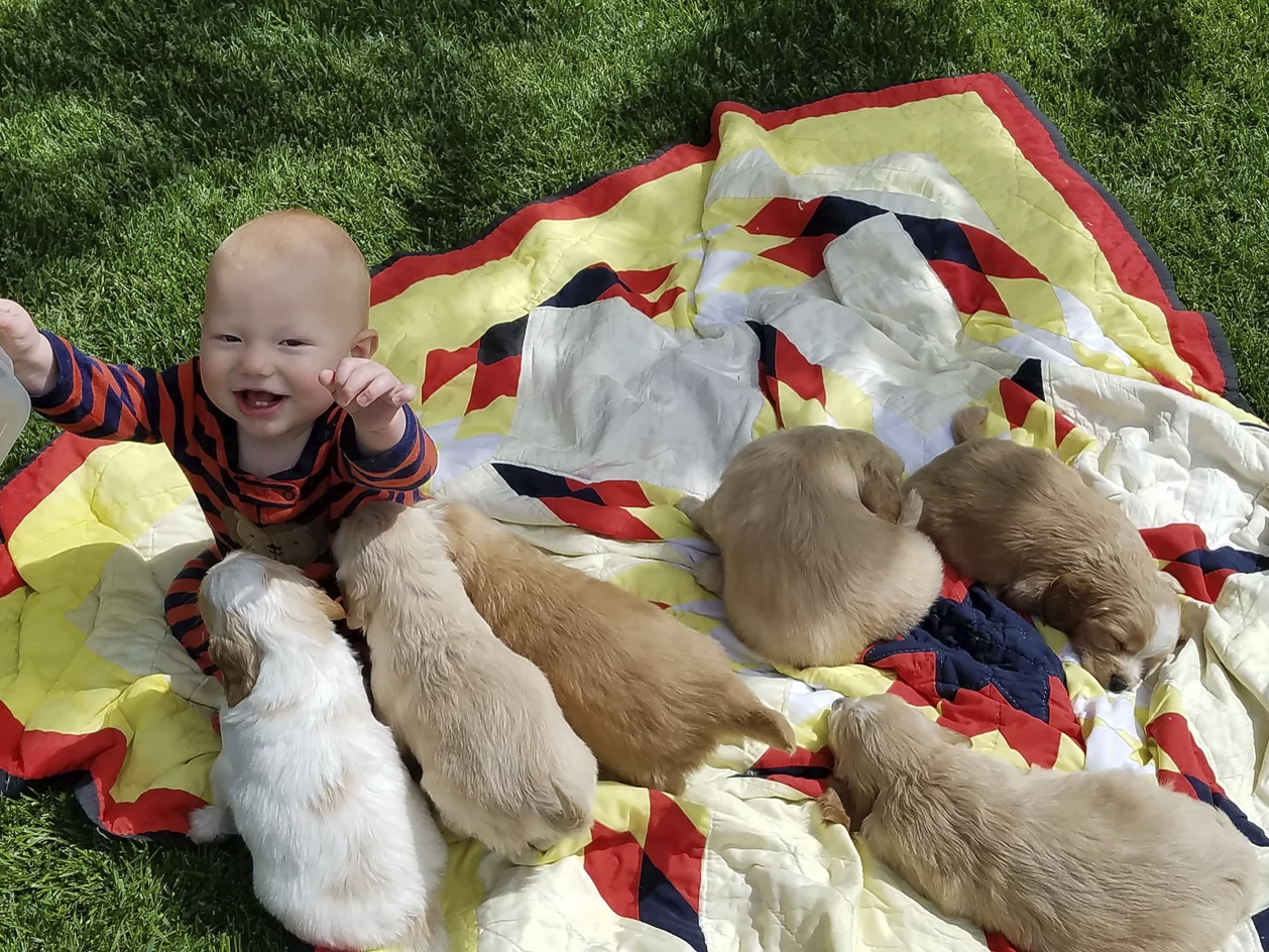 My son and the puppies!