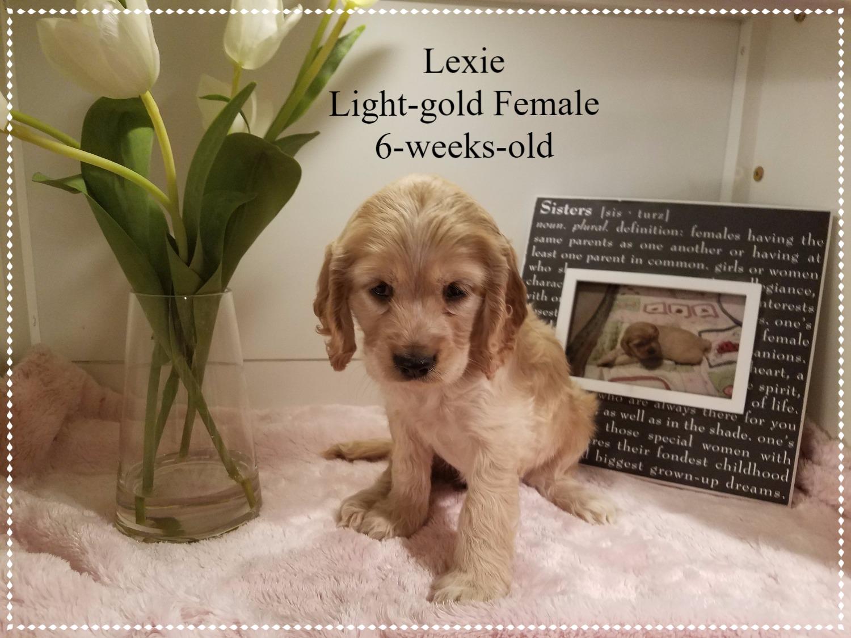 Lexie 6 weeks old.jpg