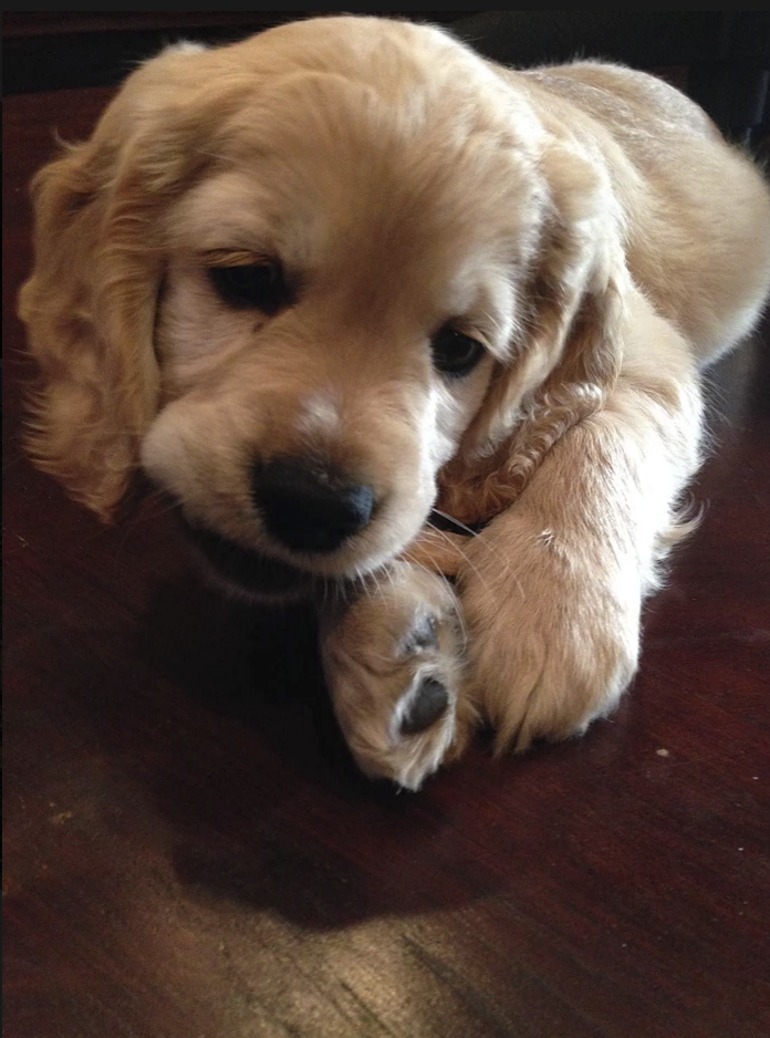 8-weeks-old