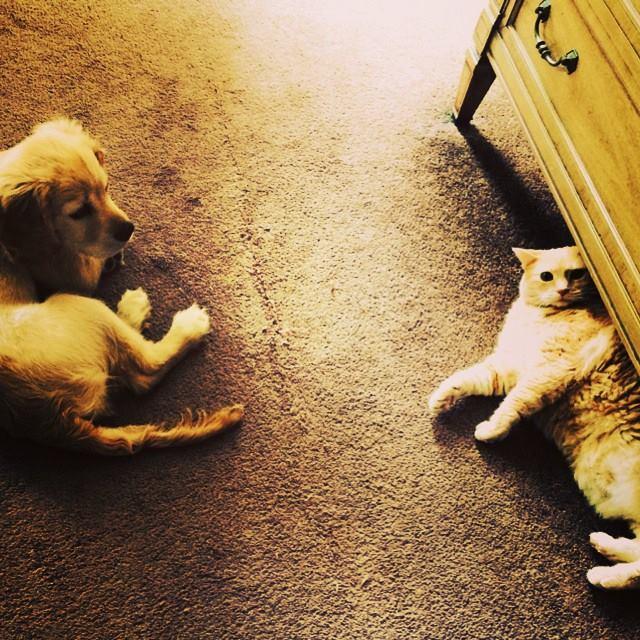 Kona and Kitty - Sibling rivalry!