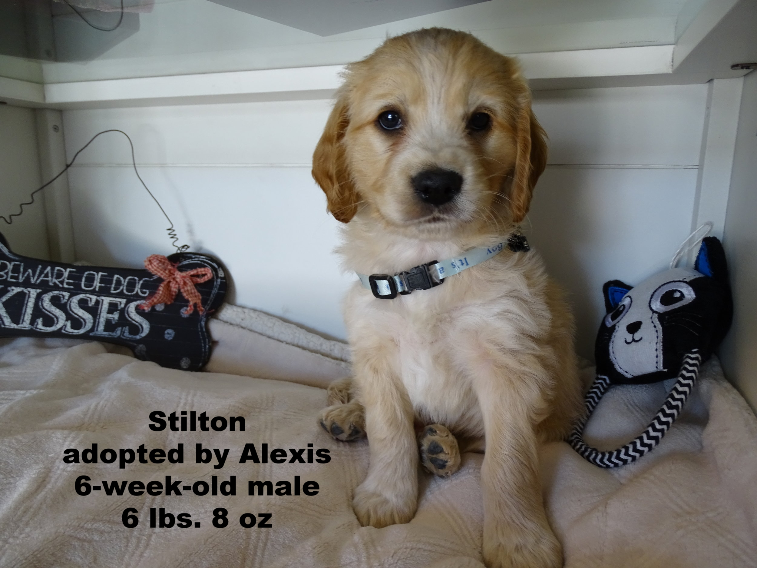 Stilton gets lighter by the week and looks like his daddy Sullivan! -
