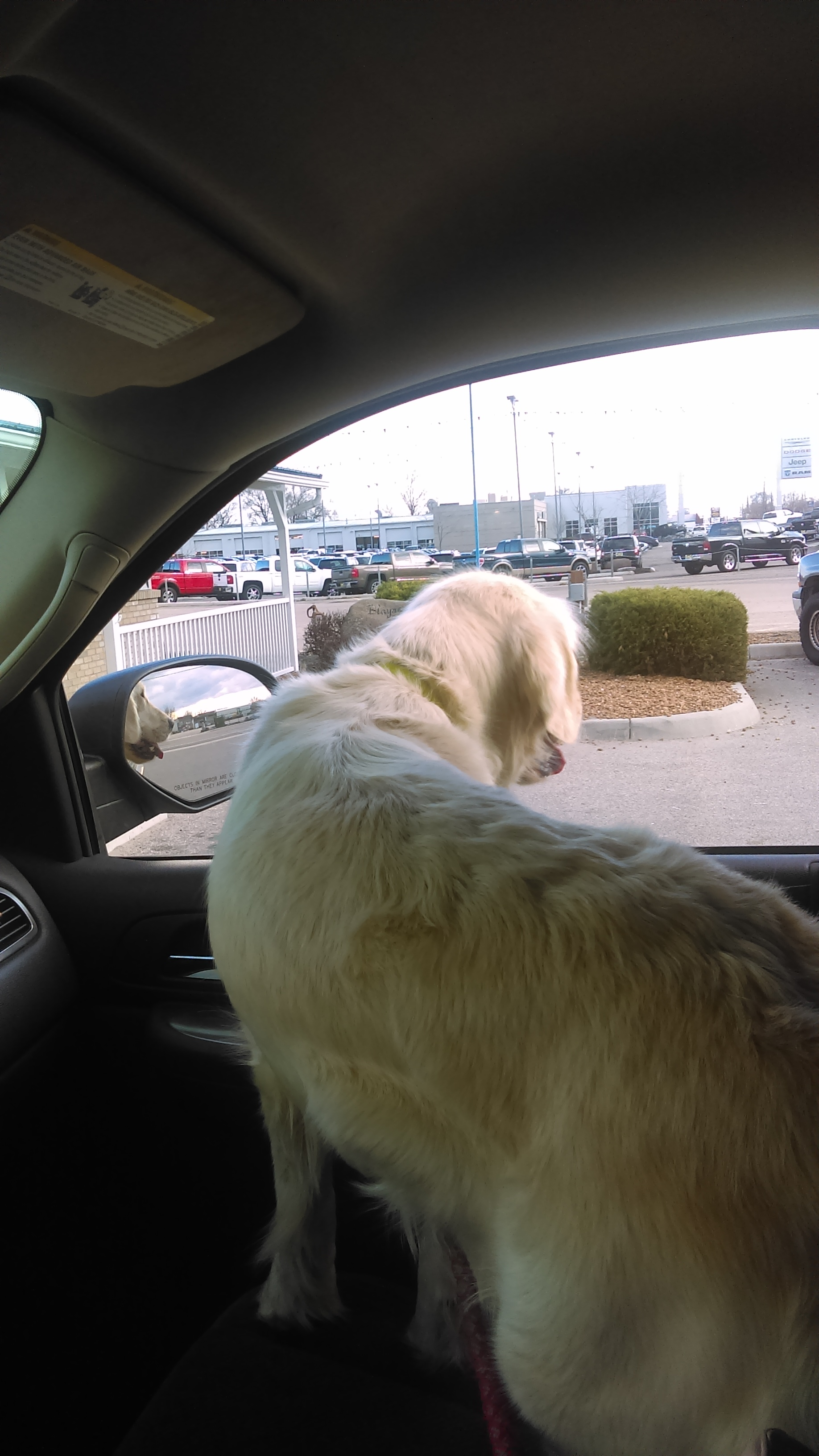 Pinkerton_ride_to_vet_nursery_puppies.jpg