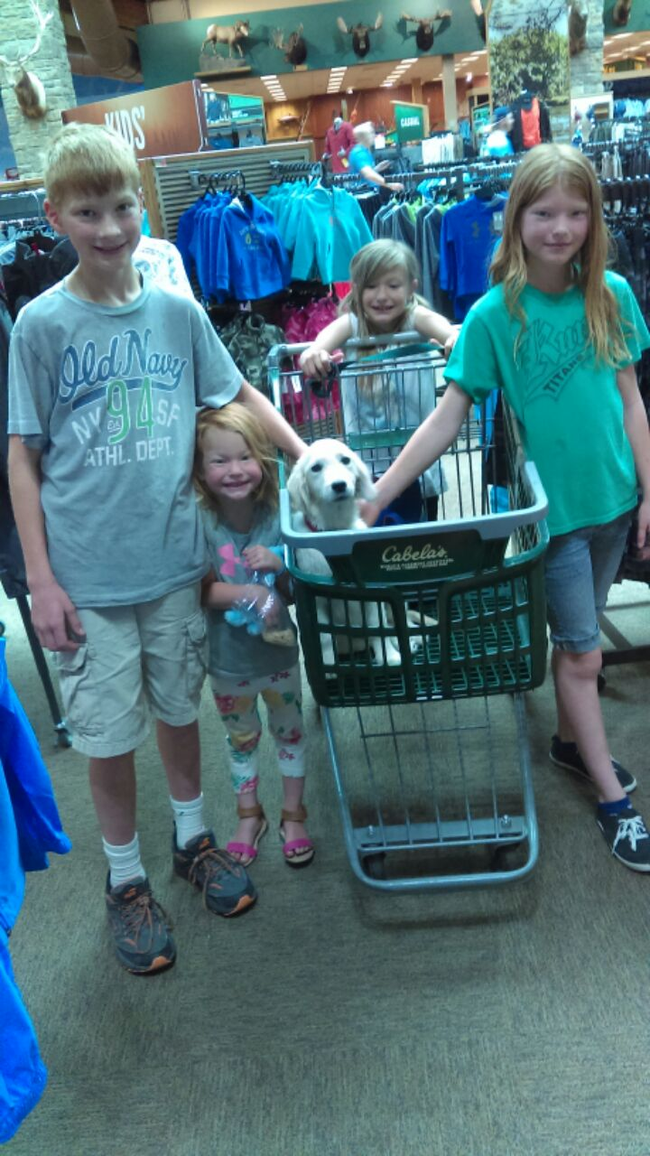 20 lbs and full grown! We are at Cabelas shopping for Father's Day