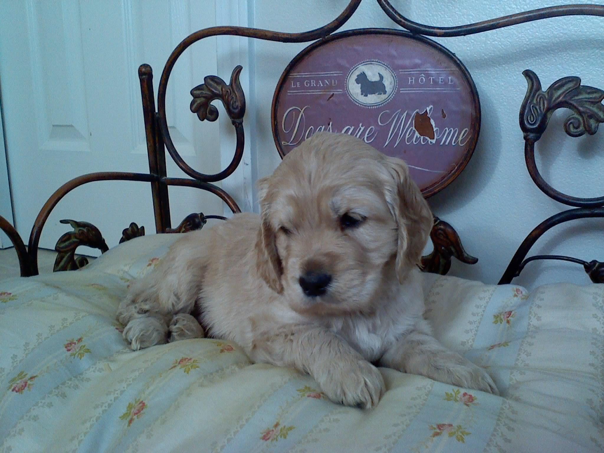 Piper 5-weeks-old