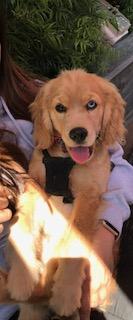 Bella (Cora), 6 Months