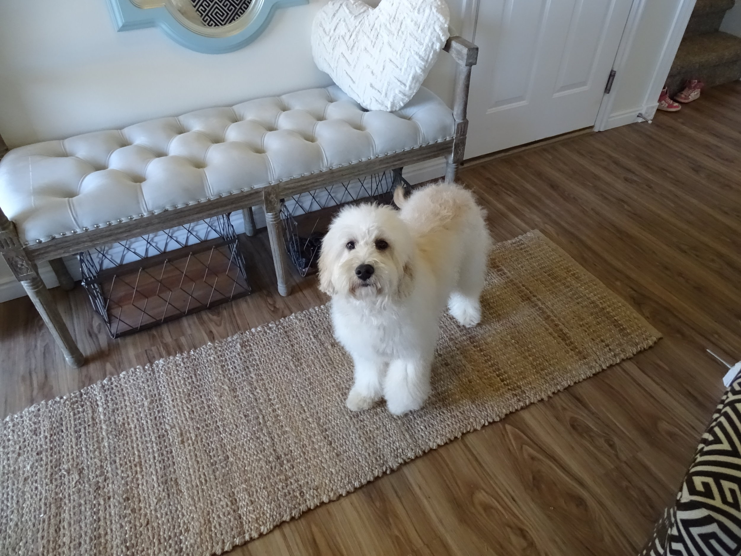 Here is Nala with her fluffy blowdried coat! -