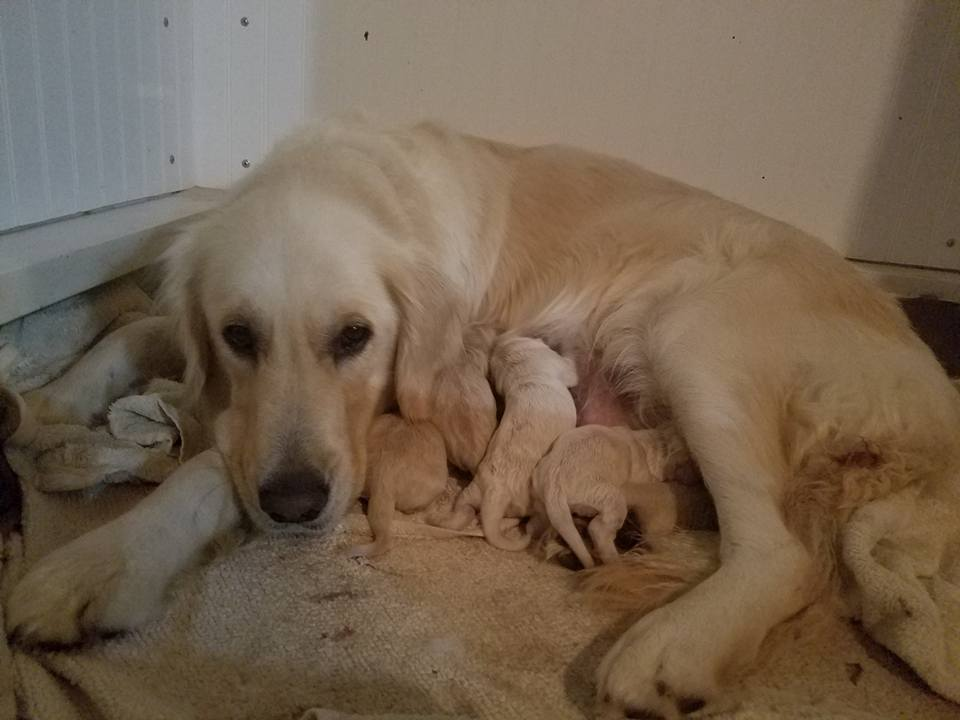8 beautiful puppies arrived on October 3, 2017
