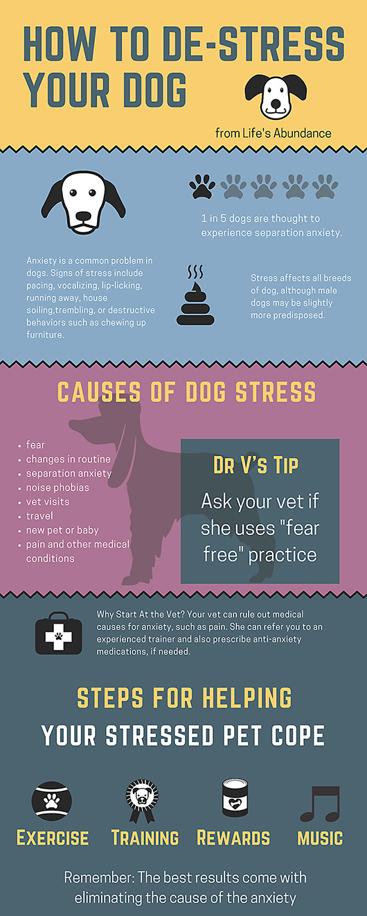 How-to-Avoid-Dog-Stress.jpg