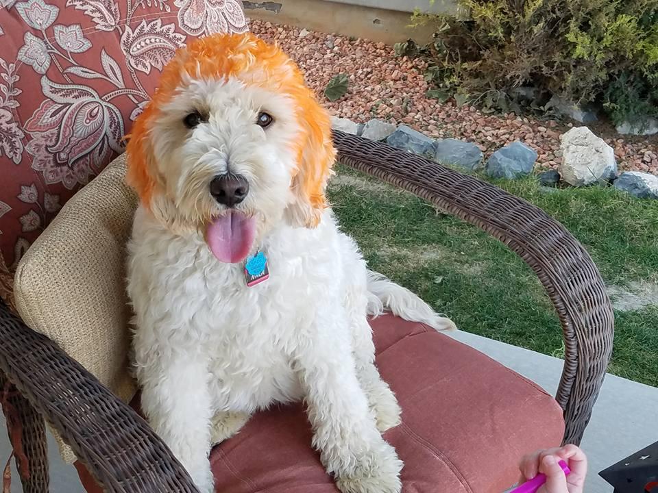 Nala as Carrot Top on Halloween 2017