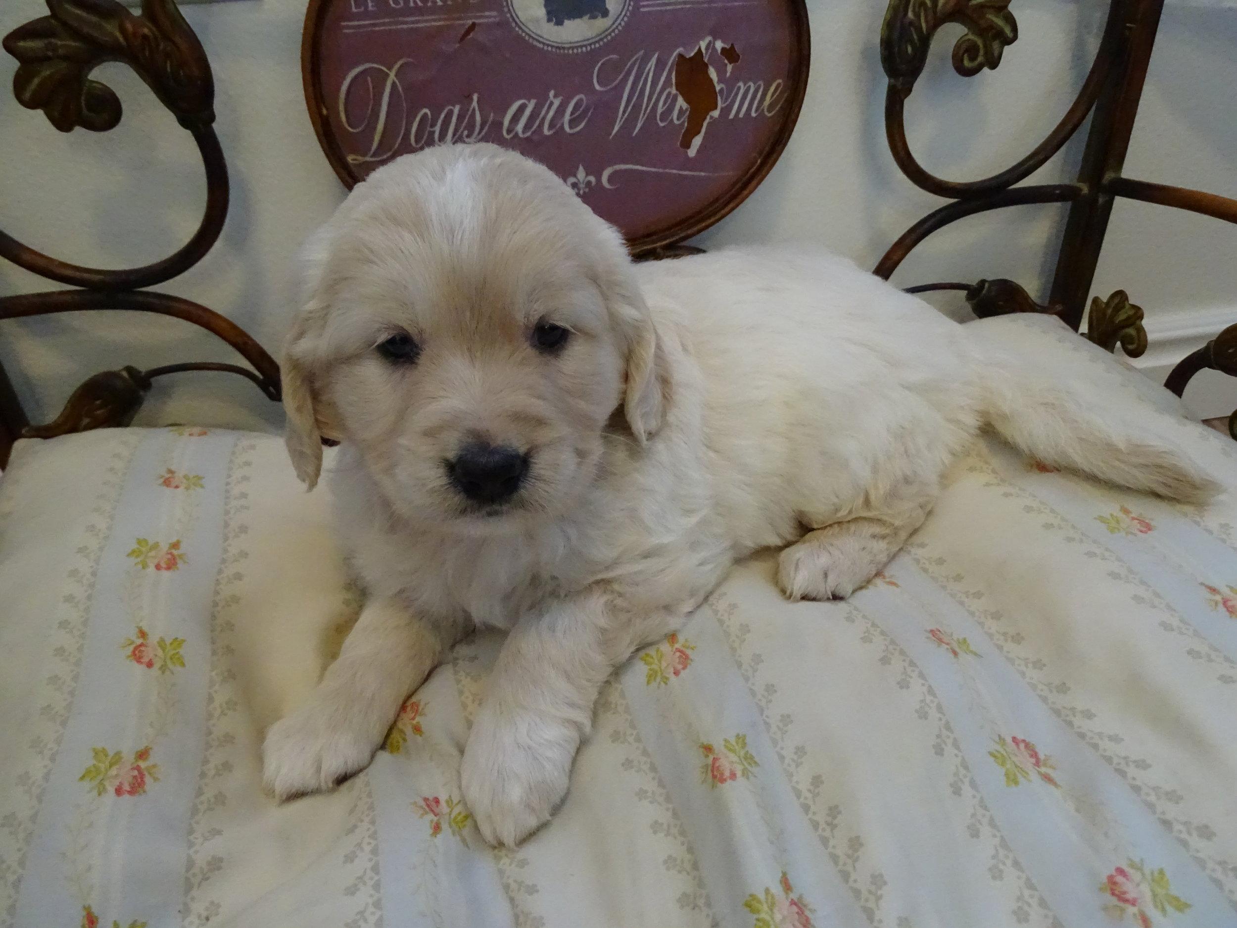 Elinor 5 weeks old