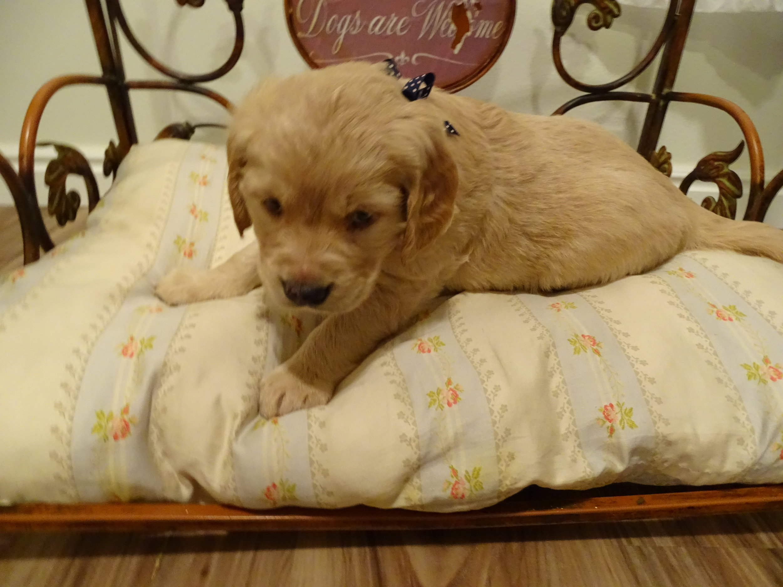 Scout Now Colonel 5-weeks-old