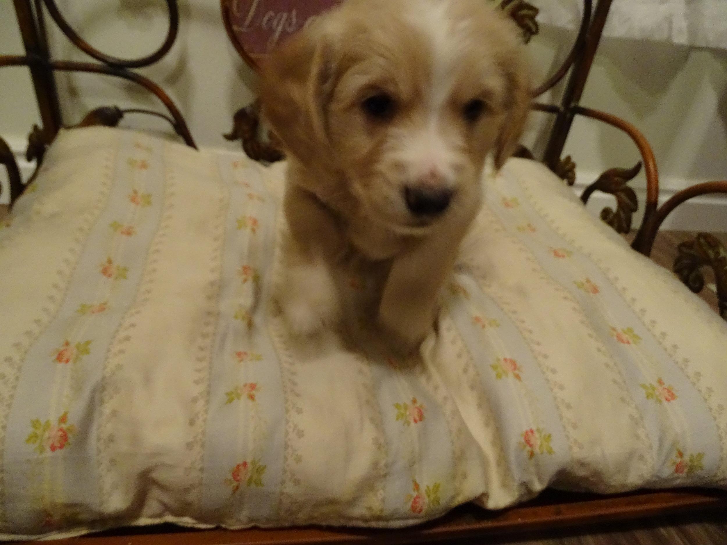Middleton 5-weeks-old