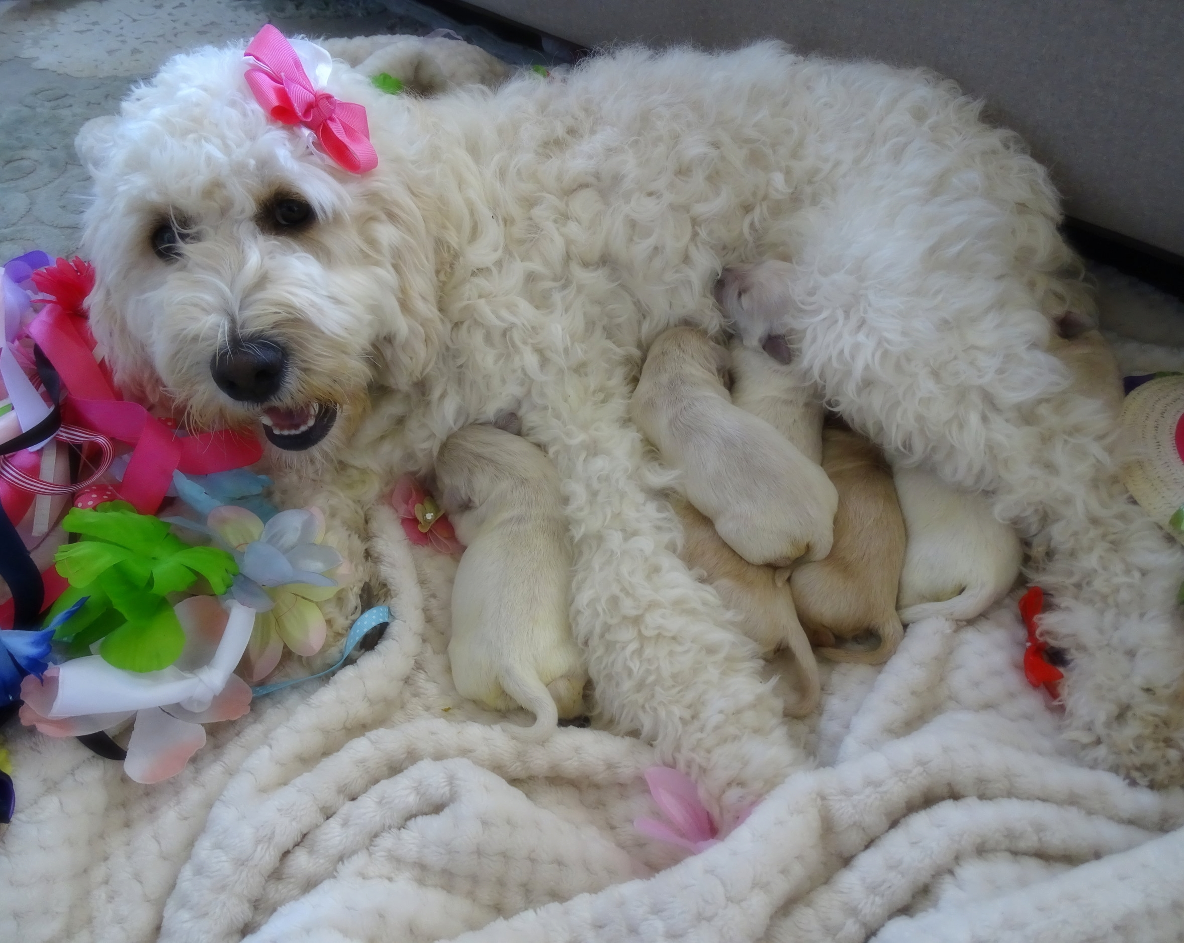 The new mama and her beautiful babies -
