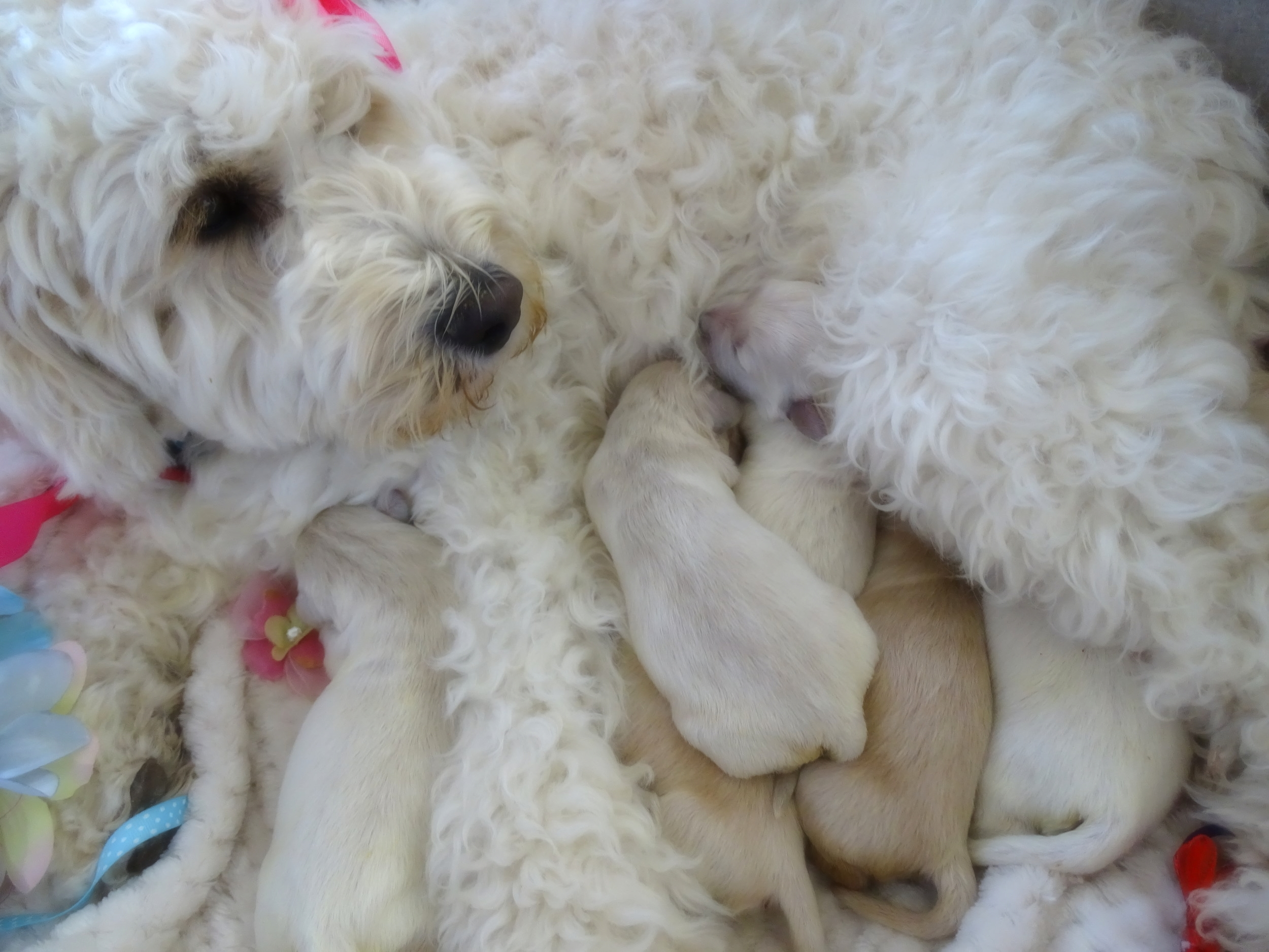 Mama and her pups -