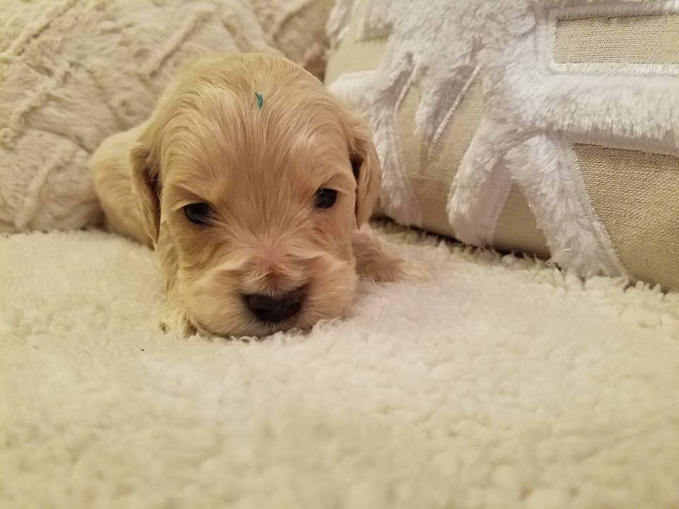 1-6-18_Carmel_4 Weeks Old 1.jpg