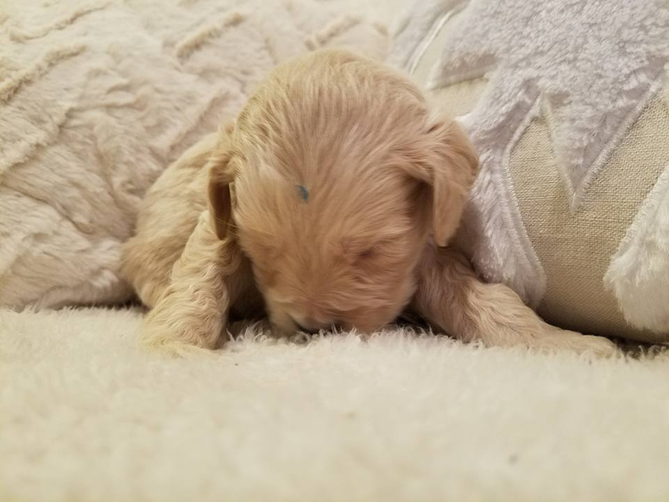 1-6-18_Carmel_4 Weeks Old 6.jpg