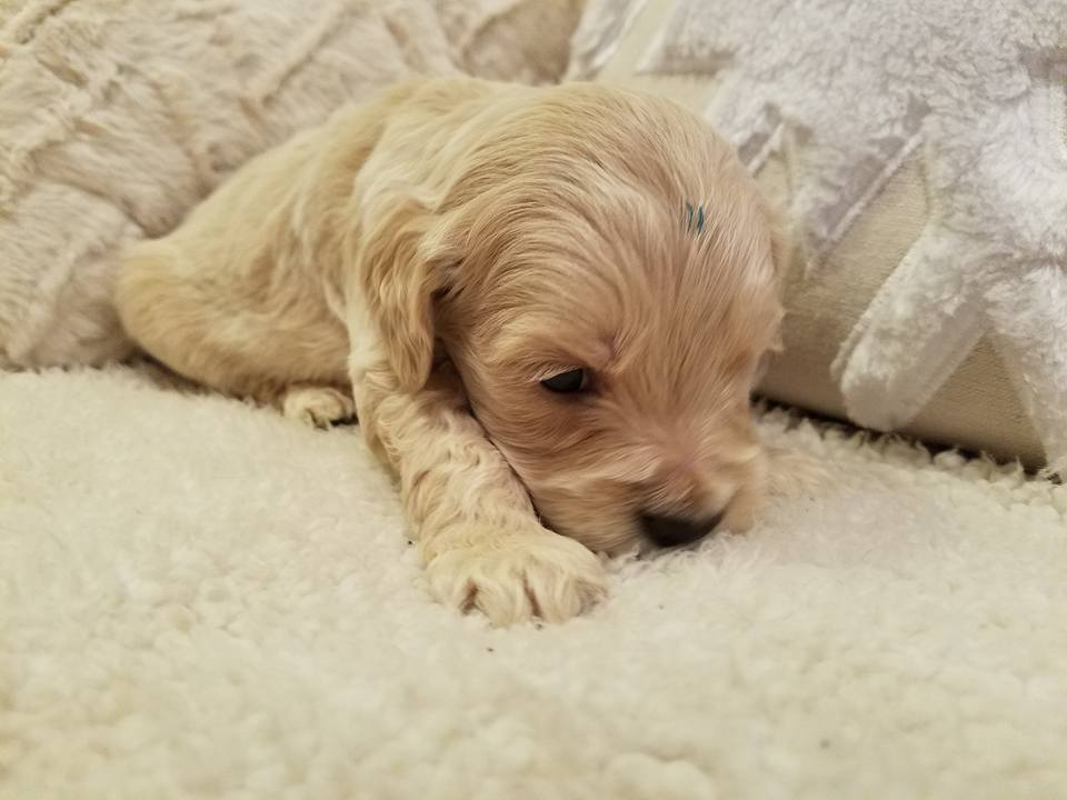 1-6-18_Carmel_4 Weeks Old 7.jpg