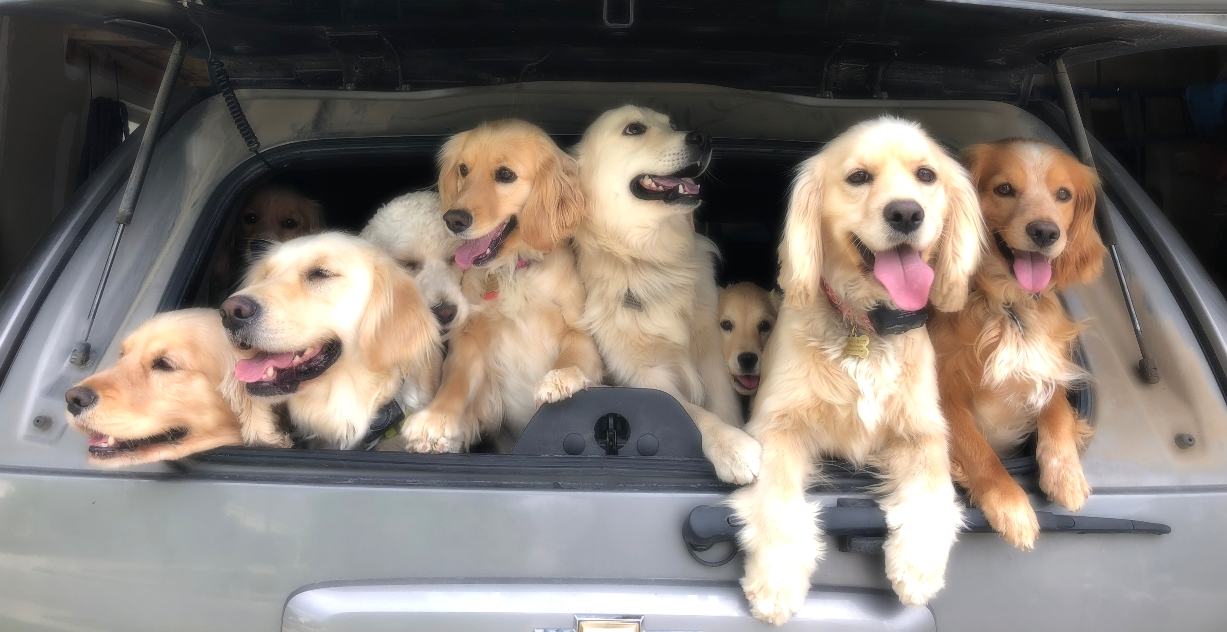 Here are our dogs ready for their next outing!