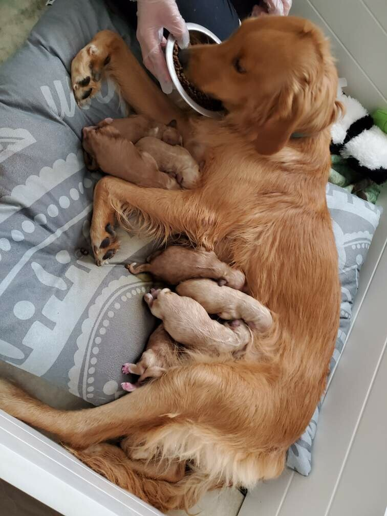 Audrina with her brand new babies