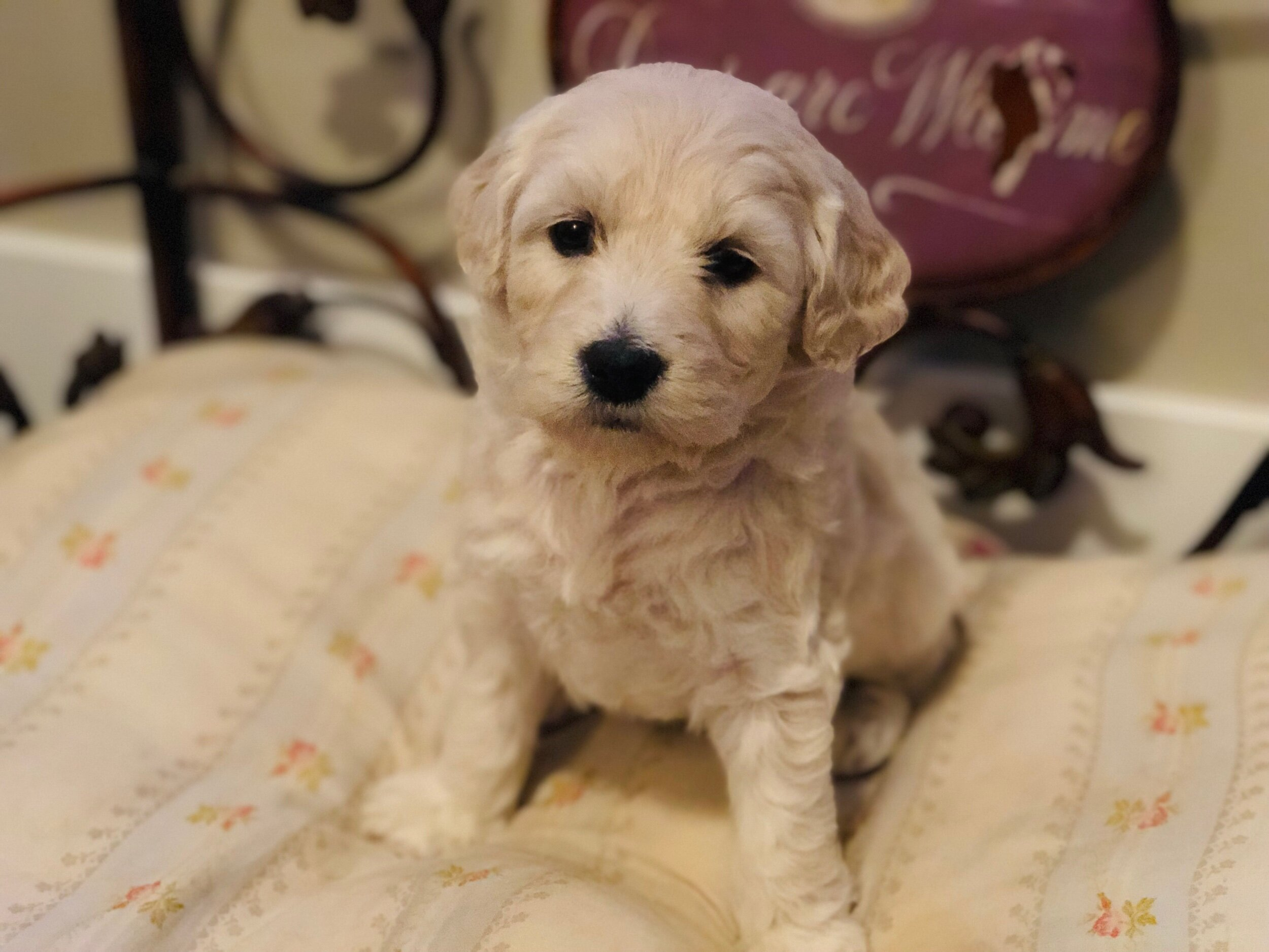 This is Steph 5-weeks-old