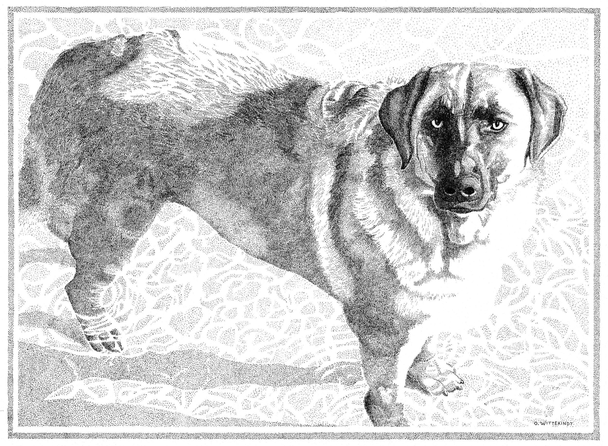 Dog smaller.jpg