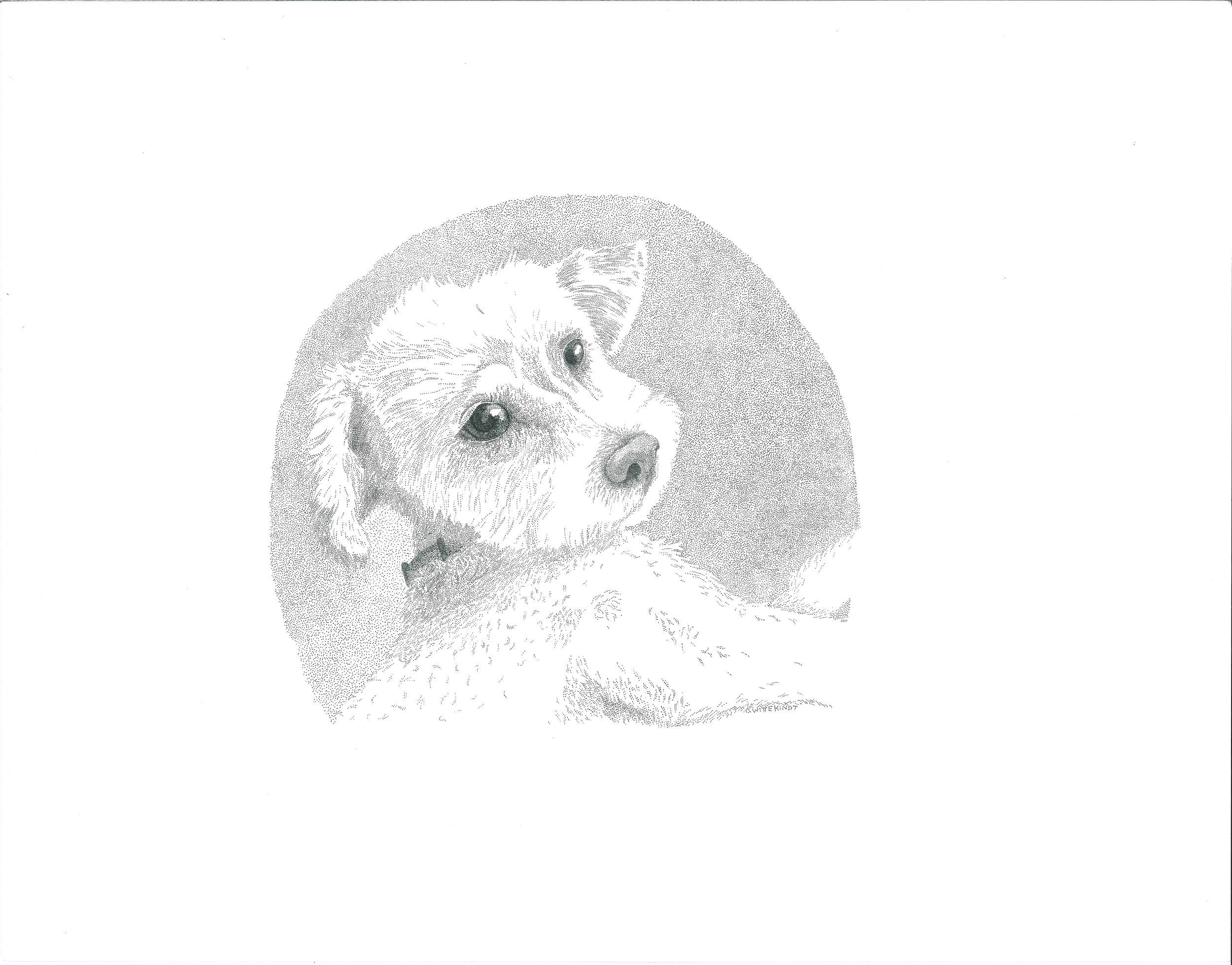 puppy .jpg