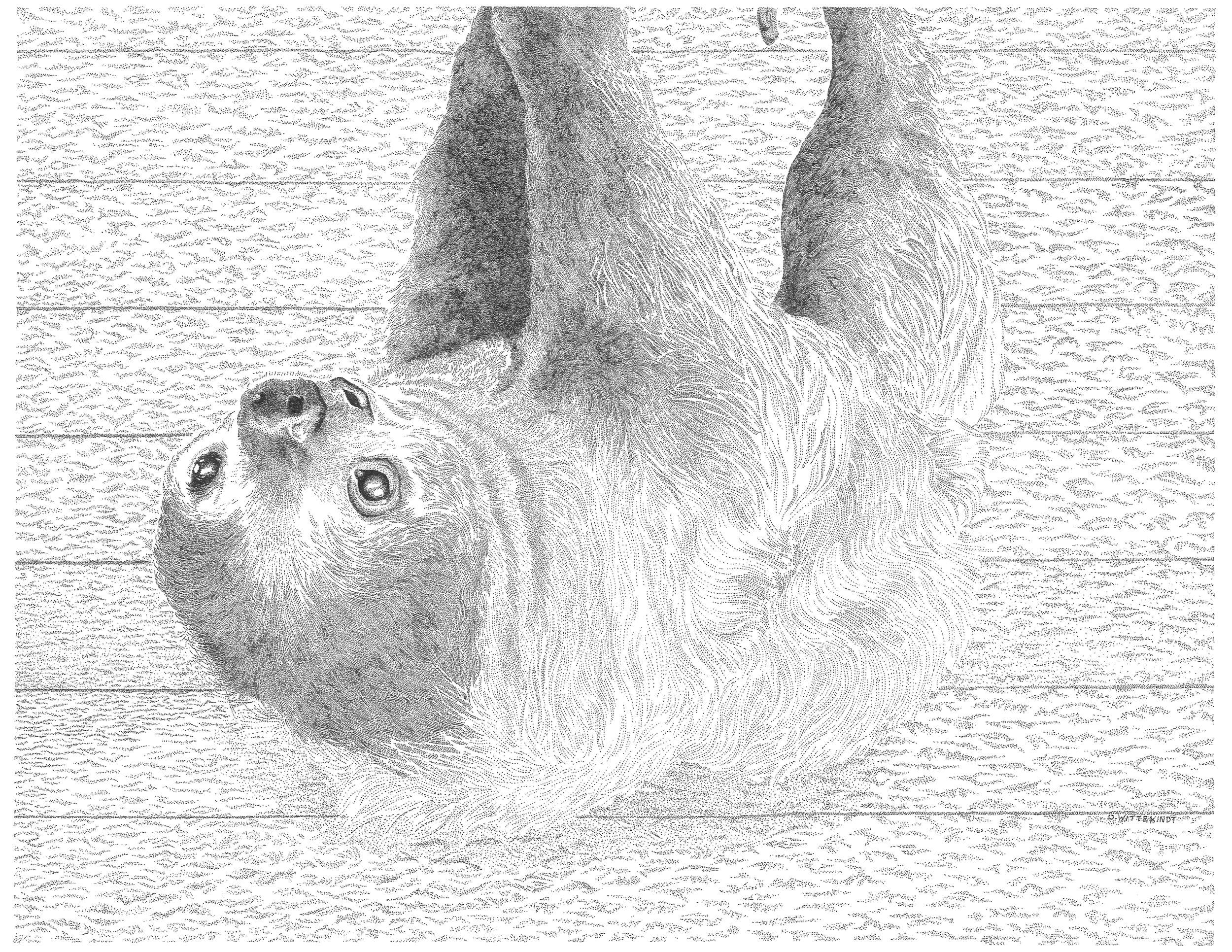 Poco the sloth