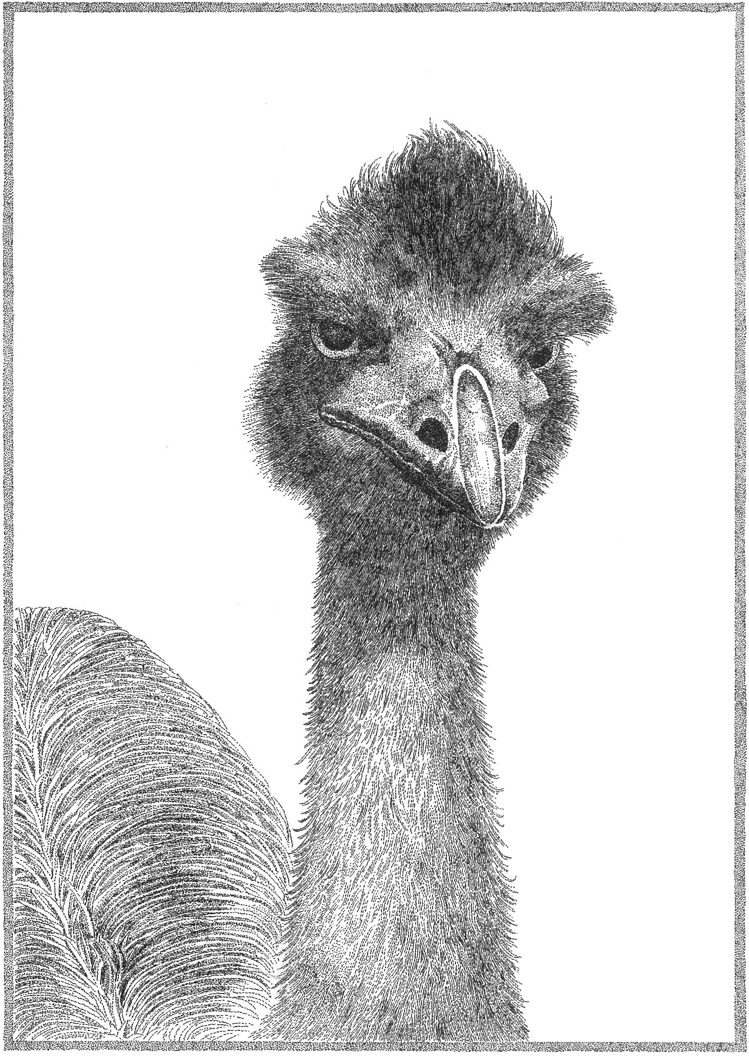 Arthur the emu