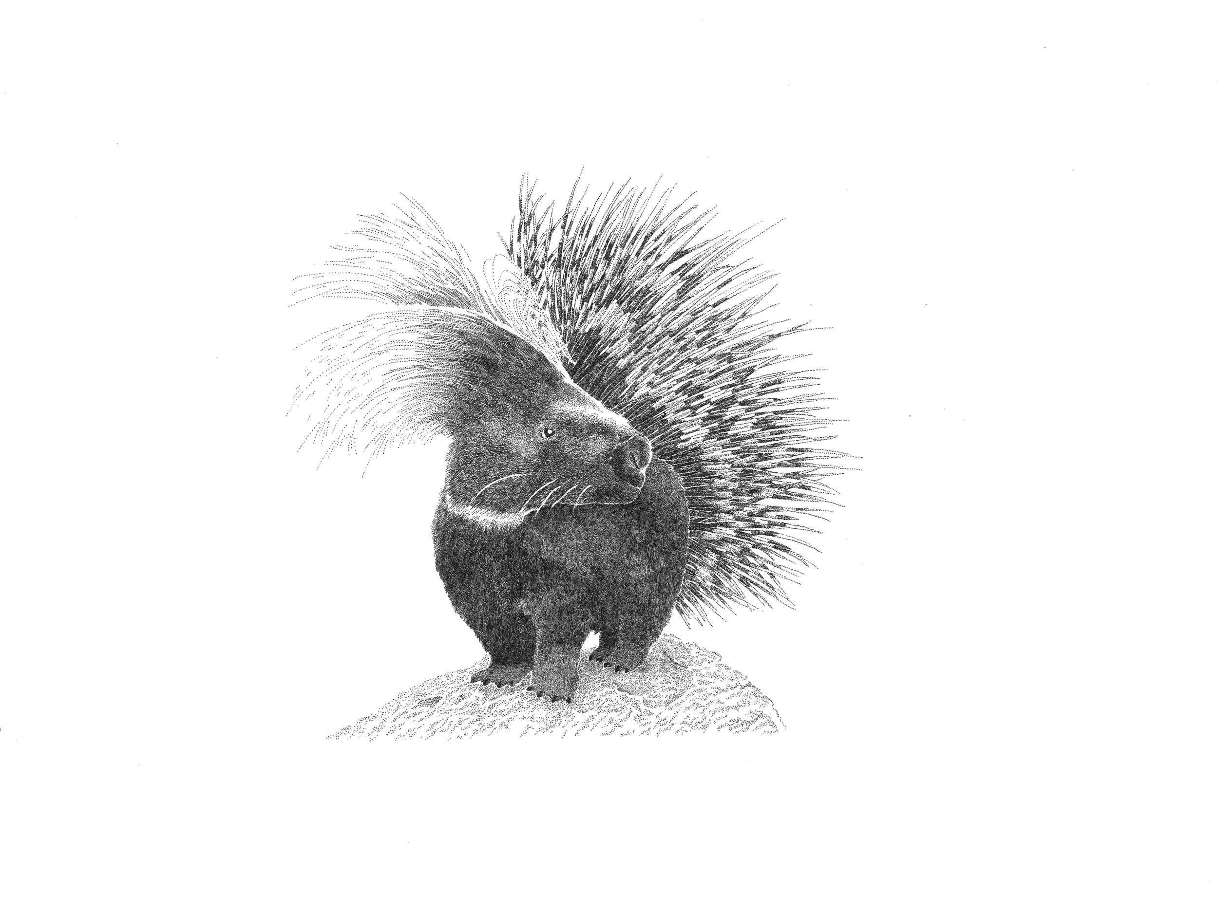 Bedhead the Porcupine