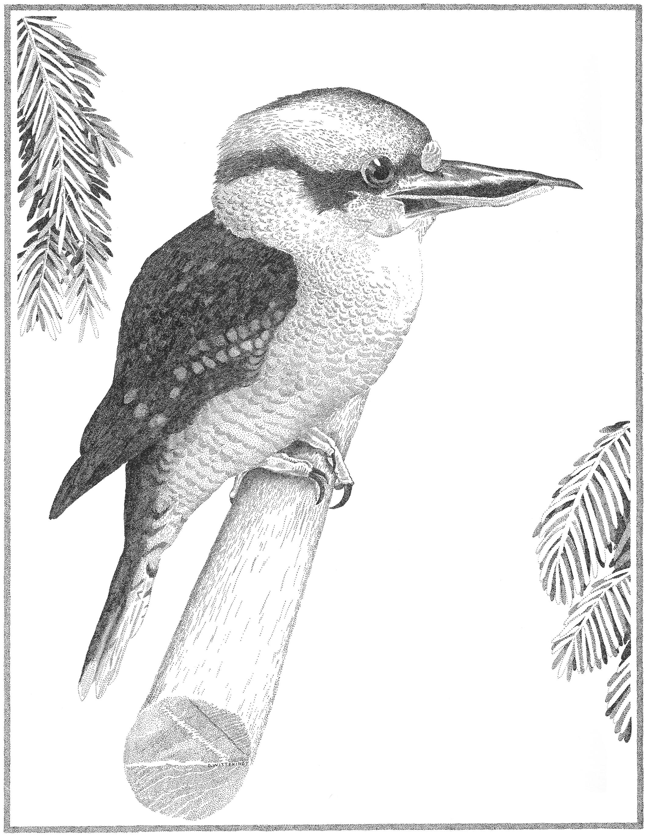 Orbit the Kookaburra