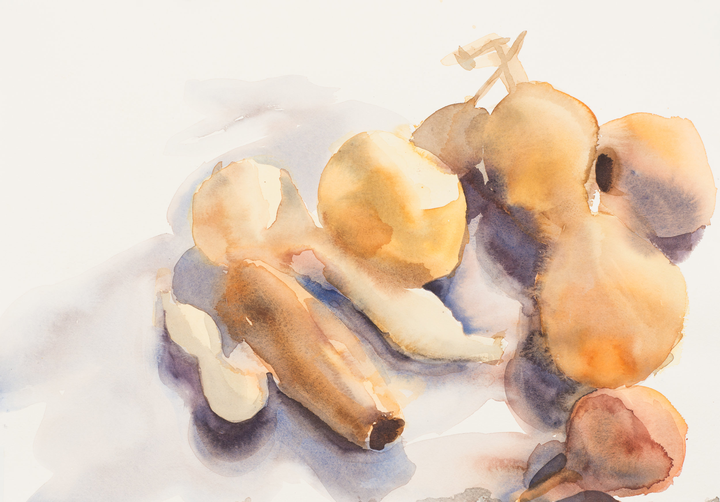 Gourds, watercolor, 2015