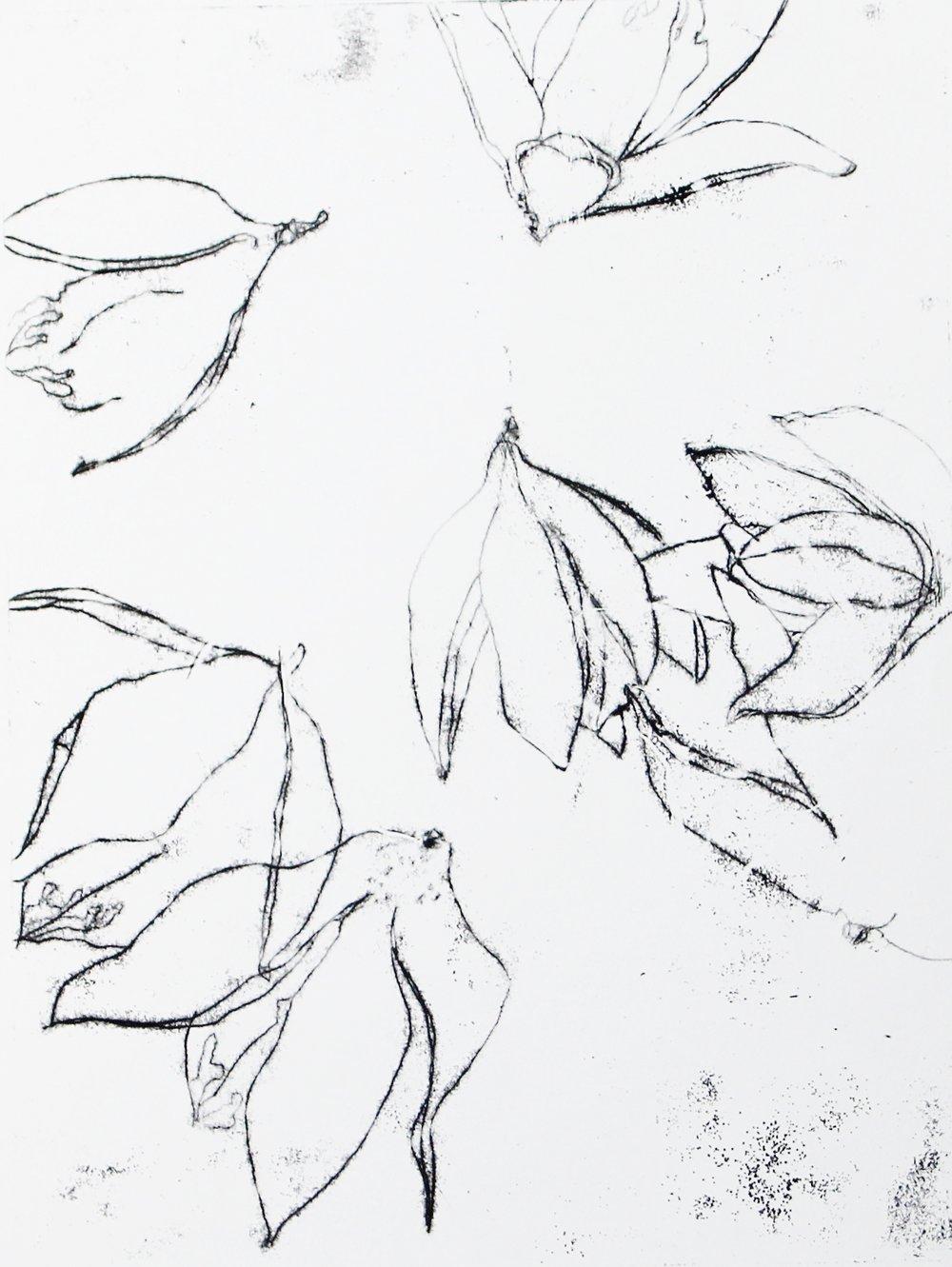 Pods,  monotype, 12 x 14, 2017