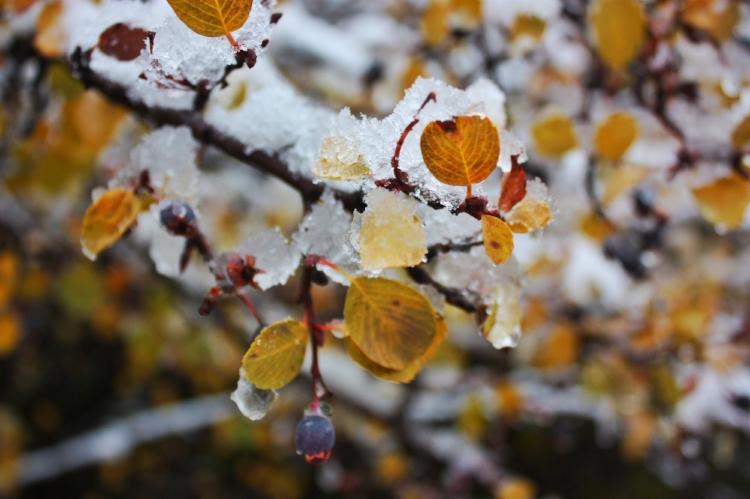 An early fall teaser snow, October 2017.