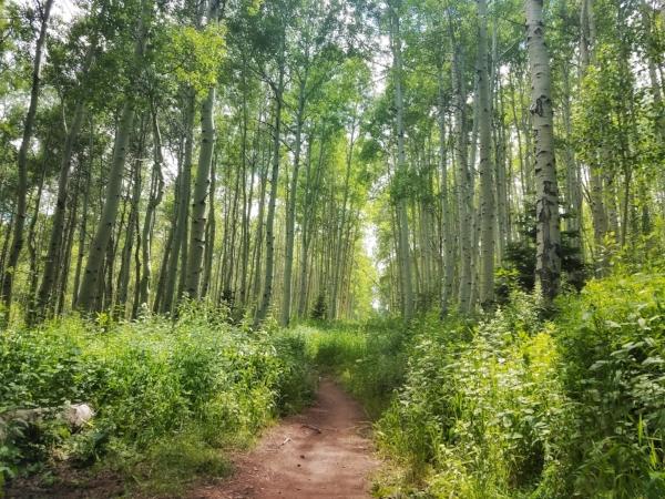 The brilliant greens of summertime in the Wasatch Range, Park City, UT. June 2018.