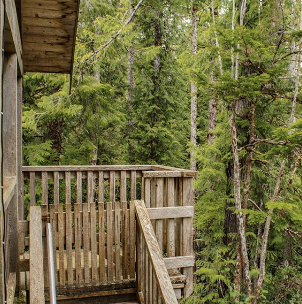 Places to Stay | Where to Stay in Tofino, Vancouver Island | Treehouse.png