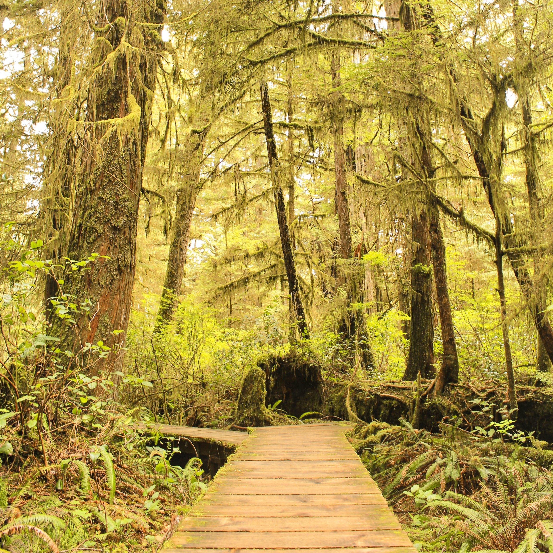 The Rainforest Trail close to Tofino