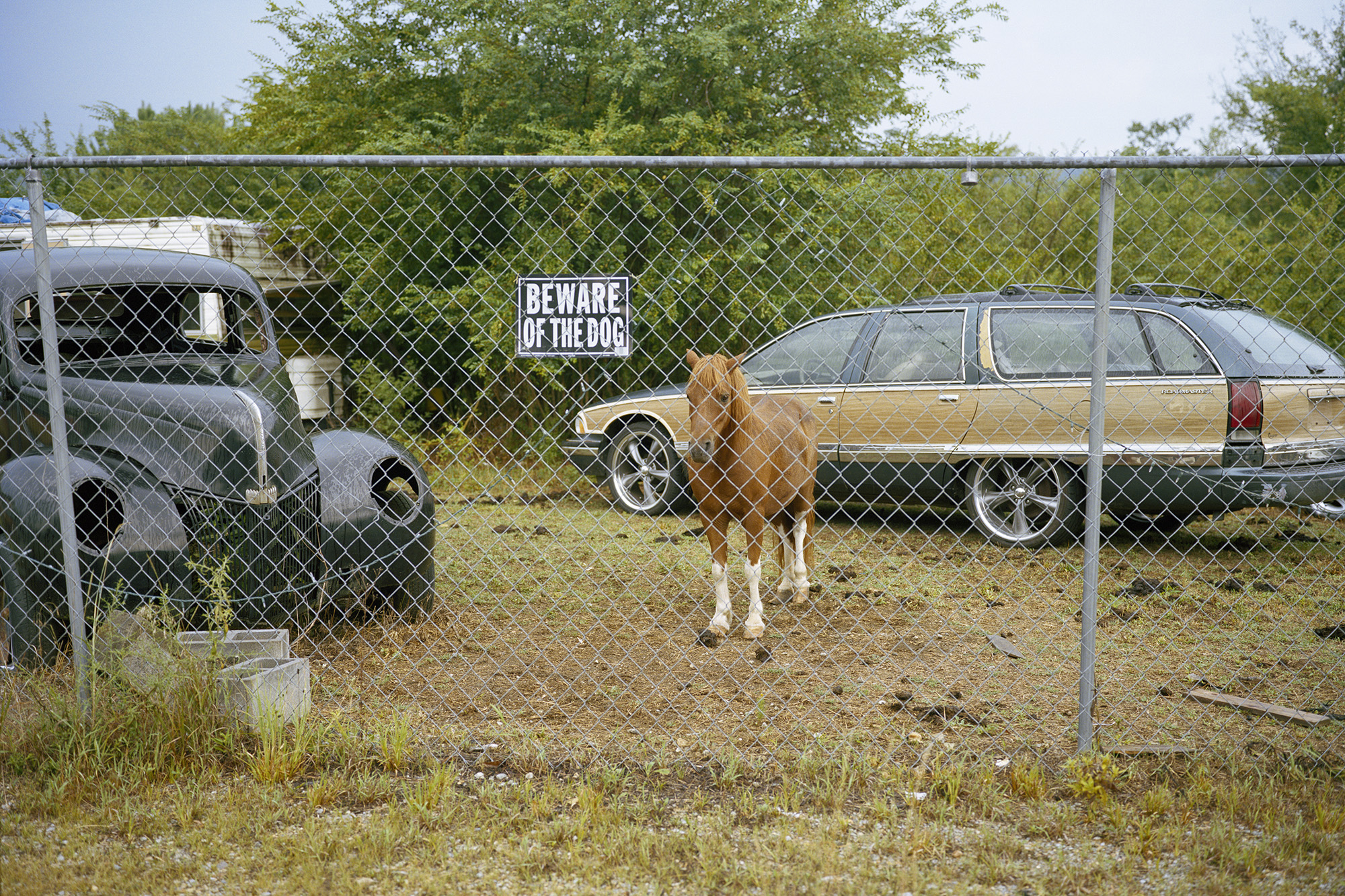 Beware of the Dog, Alabama.